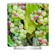 Two Bunches Shower Curtain by Heidi Smith