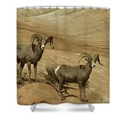Two Male Rams At Zion Shower Curtain by Jeff Swan