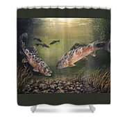 Two Rainbow Trout Shower Curtain by Donna Tucker