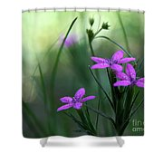 Ultra Violet Shower Curtain by Neal  Eslinger