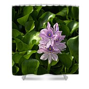 Unmanageable Beauty The Water Hyacinth Shower Curtain by Byron Varvarigos
