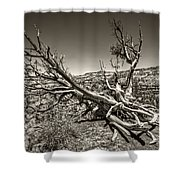 Uprooted - Bryce Canyon Sepia Shower Curtain by Tammy Wetzel