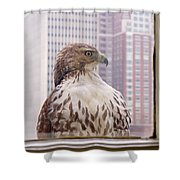 Urban Red-tailed Hawk Shower Curtain by Rona Black