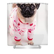 Valentine's Day - Adorable Pug Puppy In Pajamas Shower Curtain by Edward Fielding