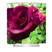 Velvet Shimmer Shower Curtain by Shawna Rowe