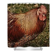 Vermont Rooster Shower Curtain by Deborah Benoit
