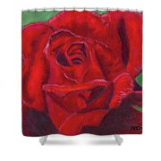 Very Red Rose Shower Curtain by Arlene Crafton