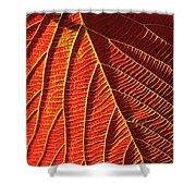 Vibrant Viburnum Shower Curtain by Bill Caldwell -        ABeautifulSky Photography