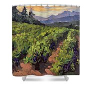 Vineyard At Dentelles Shower Curtain by Diane McClary