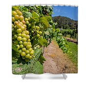 Vineyard Grapes Shower Curtain by Justin Woodhouse