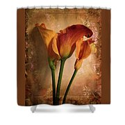 Vintage Calla Lily Shower Curtain by Jessica Jenney