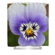 Viola Named Sorbet Marina Baby Face Shower Curtain by J McCombie