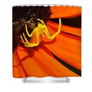 Waiting... Shower Curtain by Bill Caldwell -        ABeautifulSky Photography