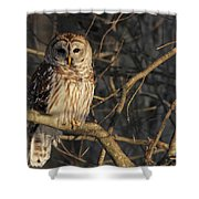 Waiting For Supper Shower Curtain by Lori Deiter