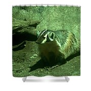 Wandering Badger Shower Curtain by Jeff Swan