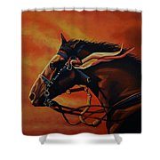 War Horse Joey  Shower Curtain by Paul Meijering