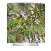 Warbler In The Cypress Shower Curtain by Deborah Benoit