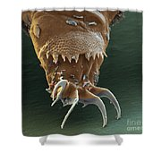 Water Bear Leg Shower Curtain by Eye of Science and Science Source