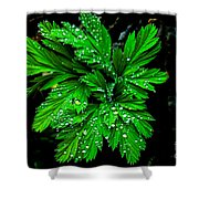 Water Drops Shower Curtain by Robert Bales