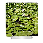 Water Lillies Shower Curtain by Les Cunliffe