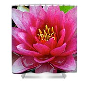 Water Lilly Shower Curtain by Frozen in Time Fine Art Photography