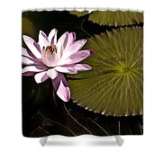 Water Lily Shower Curtain by Heiko Koehrer-Wagner