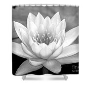 Water Lily In Black And White Shower Curtain by Sabrina L Ryan