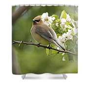 Waxwing In A Dream Shower Curtain by Penny Meyers