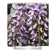 Weeping Wisteria - Spring Snow - Ice - Lavender - Flora Shower Curtain by Andee Design