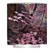 West Fork Fall Colors Shower Curtain by Dave Dilli