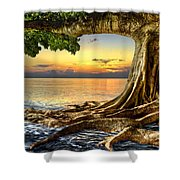 Wet Dreams Shower Curtain by Debra and Dave Vanderlaan