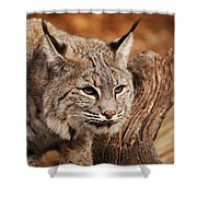 What A Face Shower Curtain by Lori Tambakis