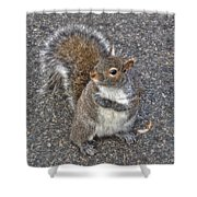 What You Looking At? Shower Curtain by Joann Vitali