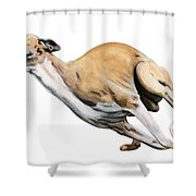 Whippet In The Wind Shower Curtain by Liane Weyers
