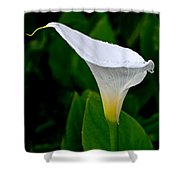 White Calla Shower Curtain by Rona Black