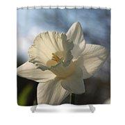 White Daffodil Shower Curtain by Jennifer Doll