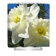White Daffodils Flowers Art Prints Spring Shower Curtain by Baslee Troutman