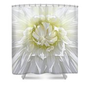 White Dahlia Floral Delight Shower Curtain by Jennie Marie Schell