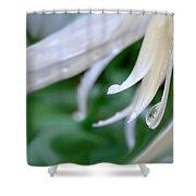 White Daisy Petals Raindrops Shower Curtain by Jennie Marie Schell