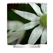White Flannel Flowers Shower Curtain by Justin Woodhouse