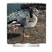 WHITE FRONTED GOOSE Shower Curtain by Skip Willits