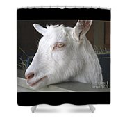 White Goat Shower Curtain by Ann Horn