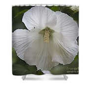 White Hibiscus Squared Shower Curtain by Teresa Mucha