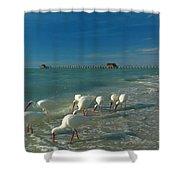 White Ibis Near Historic Naples Pier Shower Curtain by Juergen Roth