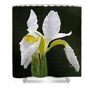 White Iris Shower Curtain by Juergen Roth