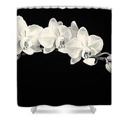 White Orchids Monochrome Shower Curtain by Adam Romanowicz