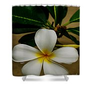 White Plumeria 2 Shower Curtain by Cheryl Young