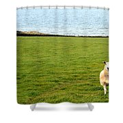 White Sheep In A Green Field By The Sea Shower Curtain by Georgia Fowler
