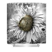 White Sunflower Shower Curtain by Debra and Dave Vanderlaan