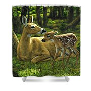 Whitetail Deer - First Spring Shower Curtain by Crista Forest